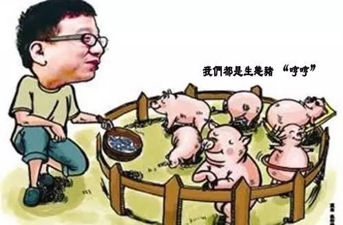 """7年养猪一头20万,丁磊养的下一头""""肥猪""""会是网易影视吗?"""